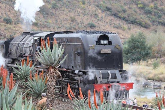 Ixopo, Sør-Afrika: Flower tours