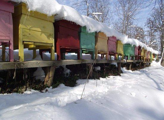 Zarapovo Honey House