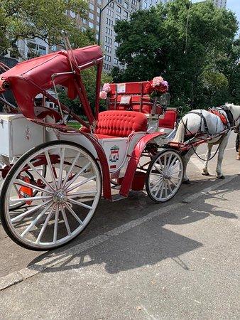 A spasso nel tempo: giro di Central Park in carrozza vintage trainata da cavalli ,un modo alternativo di visitare il polmone verde della città. Prenotazione via e-mail