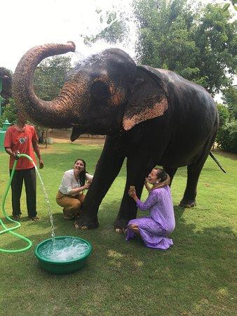 Maravillosa Actividad Elefantes India