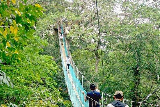 Go Peru Jungle