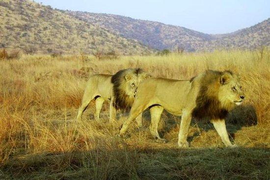 Swangs safaris