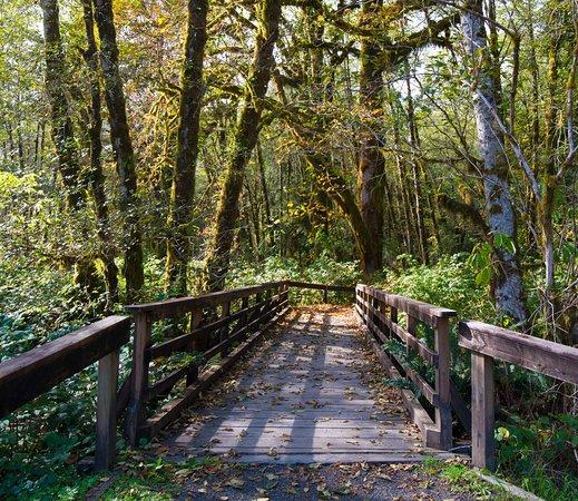 Maple Glade Rain Forest Trail