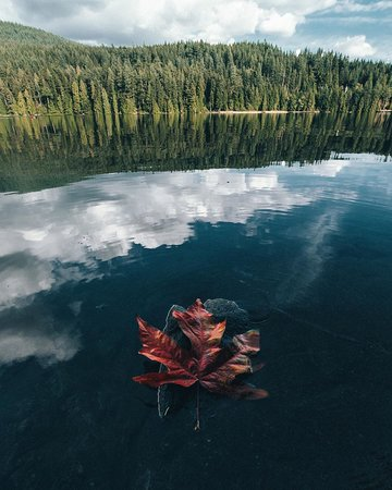 Belcarra, Canada: Maybe we're born with it... Maybe it maple-leaves 🍁🍁   📍 Sasmat Lake 📷 @justinforkheim/IG