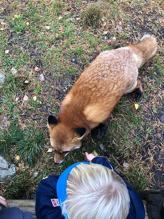 Flå, Norge: Bjørneparken
