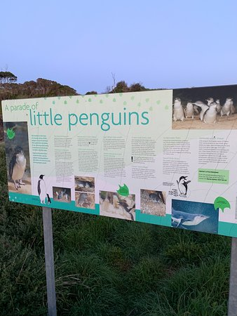 Wynyard Penguin Tours