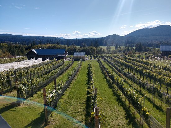 Half-Day Victoria to Cowichan Valley Wine Tour with Tastings: Vinyard