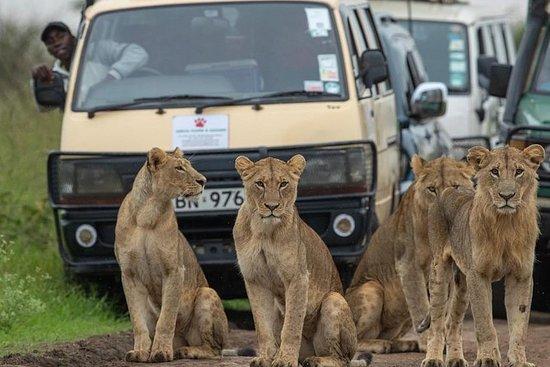 3 giorni 2 notti Masai Mara che