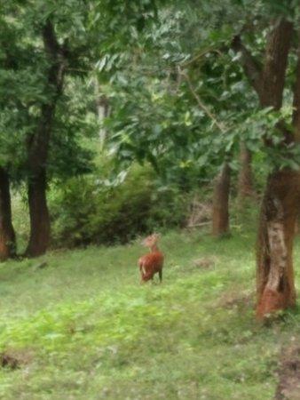 Biligiriranga Hills, India: A welcome visitor at Girukana