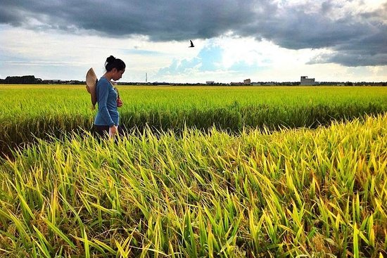 Paddy Field, Fishing And Fireflies Tour