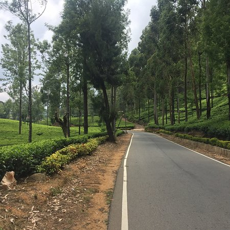 On the way stop for look tea plantation