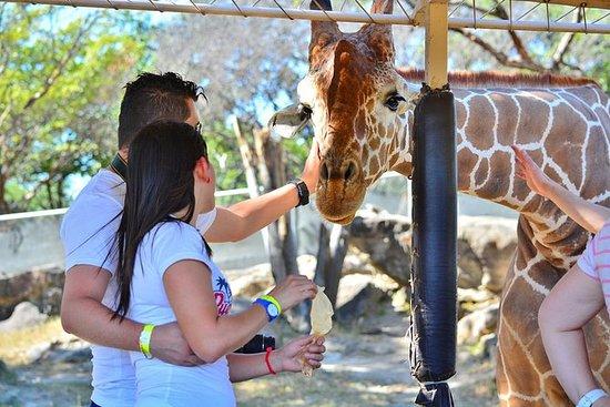 Africa Safari Adventure Park...