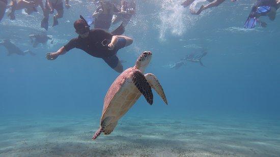 Schildkröten hautnah