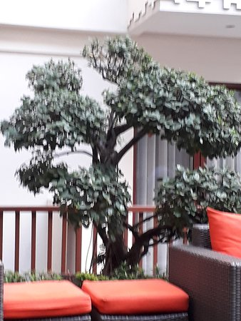 Bonsai in the lounge area