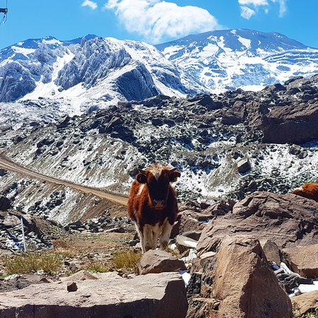 Andes Mountains Day Trip