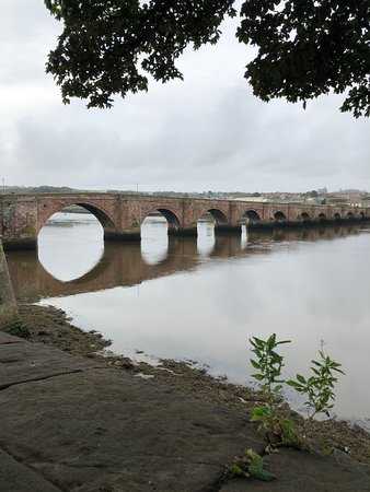 Berwick upon Tweed, UK: Both taken at random in Berwick it's just a lovely peaceful place and a great wildlife habitat upon the banks of the mighty tweed