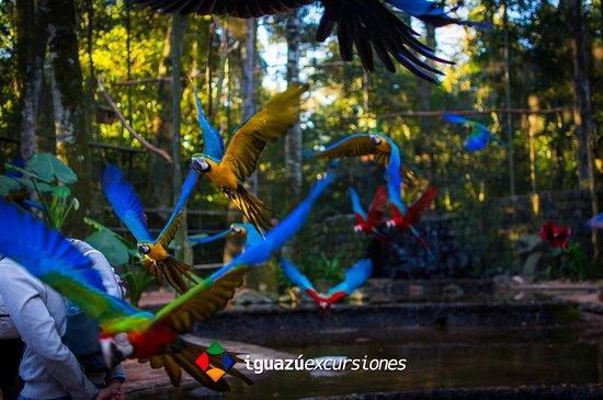 Iguazu Excursiones: Foto tomada en el Parque de las Aves, ubicado en Foz do Iguaçu.