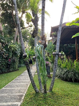 pathway to pool and dining