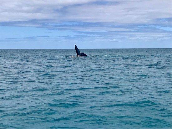 Jet Boat Whale Watching Safari from Dunsborough Φωτογραφία