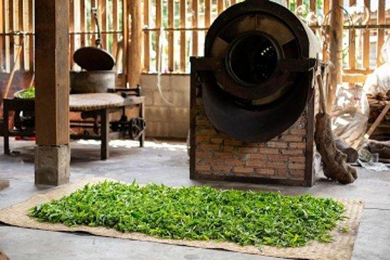 Traditional Processing tea.  DARA TEA & Raan Khao Soi Jae Sing.