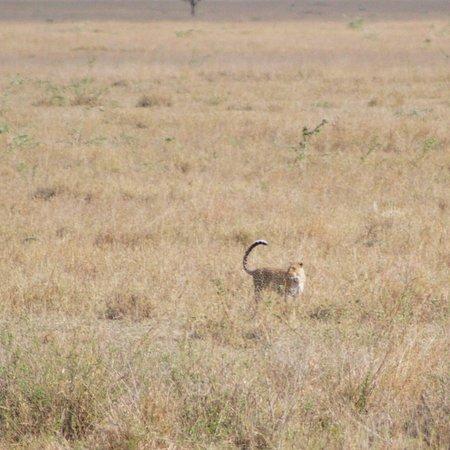Tarangire Day Tour: Leopard