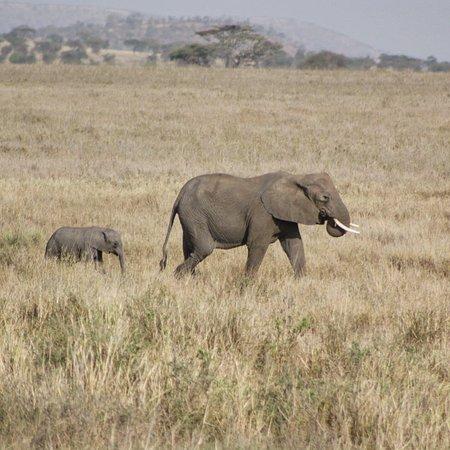 Tarangire Day Tour: Elephants