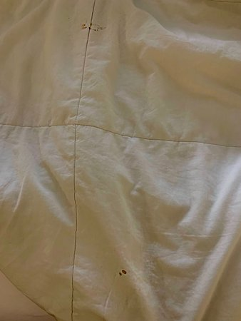 Blood stains on comforter