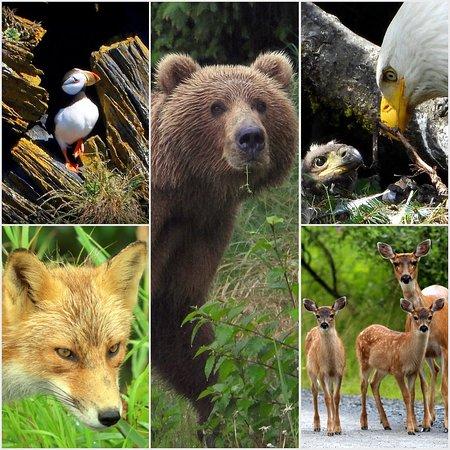 Kodiak, Alaska: The Kodiak Life