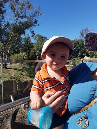 San Diego Zoo Ticket: One young patron that took Gramma to the Zoo today