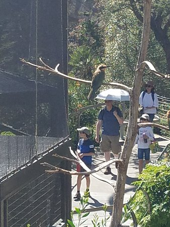 San Diego Zoo Ticket: New Bird enclosure feature brightly colored birds that you can view in their habitat.  SD Zoo