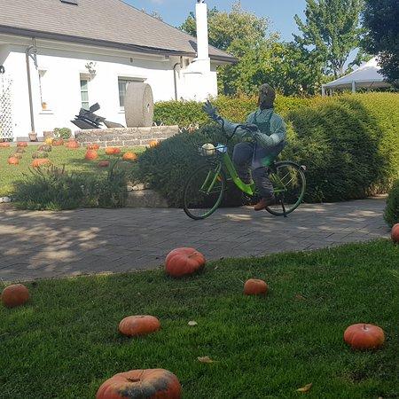 Pignataro Maggiore, Olaszország: Pumpkin patch, il giardino delle zucche