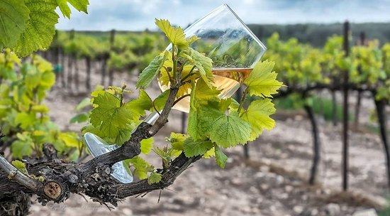 Nevo Winery