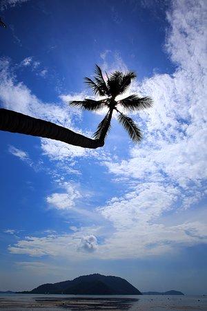 Phuket, Tailandia: ต้นมะพร้าว บริเวณริมชายหาดหน้าที่พัก เดอะวิจิตร รีสอร์ท ในยามเช้าของวันอาทิตย์ ต้นเดือนตุลาคม 2562