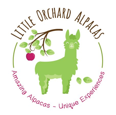 Little Orchard Alpacas - Experiences and Bell Tent Glamping