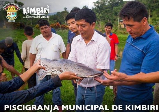 Kimbiri District, Peru: Piscigranja municipal de kimbiri, también llamado piscigranja municpal del vraem. Kimbiri es principal proveedor de alevinos de paco, paiche, gamita, tilapia,  etc en todo el vraem