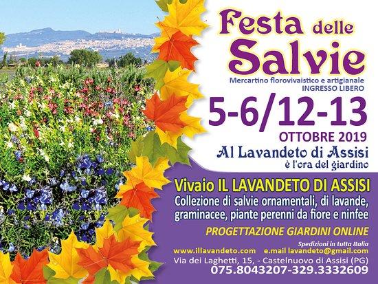 Festa delle salvie Assisi. Eventi ottobre Assisi Festa delle salvie 12/13 ottobre 2019