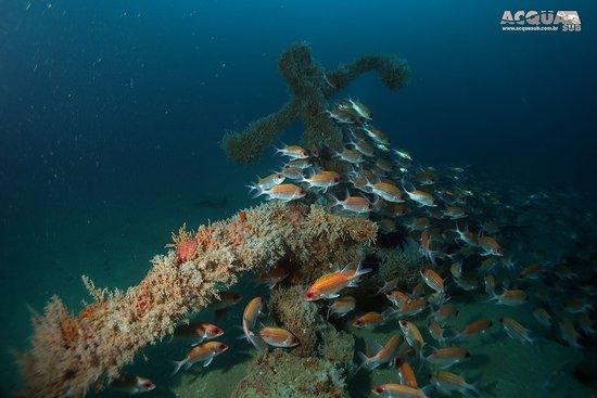 Mergulho no naufrágio Índia - 53 m - Guarapari /Es