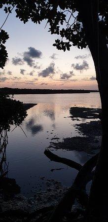 Gita tra le mangrovie con beach boy Mauro
