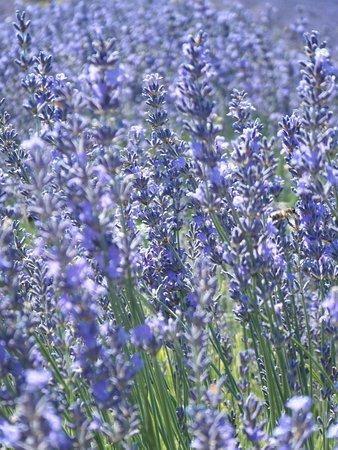 Provence-Alpes-Cote d'Azur, France: Provence-Alpes-Côte d'Azur