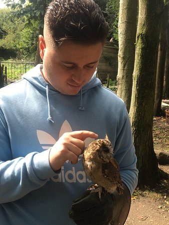 Meeting the owls
