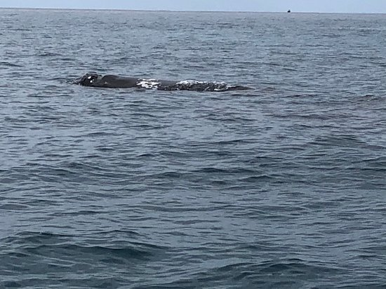Jet Boat Whale Watching Safari from Dunsborough: Great day