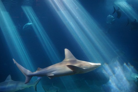 Maui Ocean Center Admission Ticket: Deep water room with the sharks