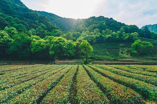Meijiawu Tea Garden