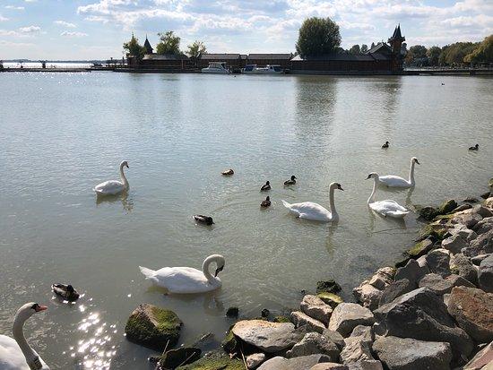 Озеро Хевиз: лучшие советы перед посещением - TripAdvisor