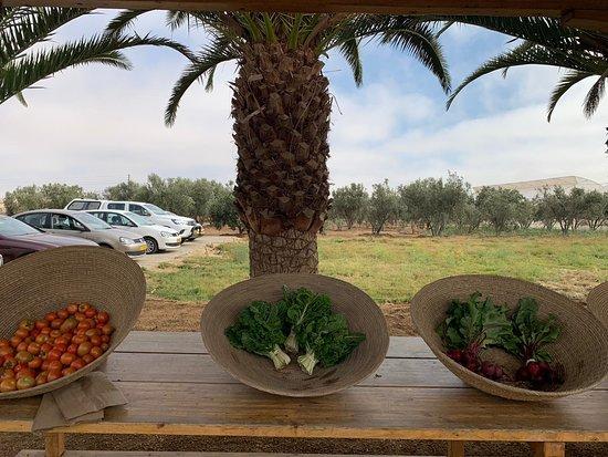 Farm Shalom