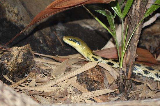 a snake amongst  the foliage