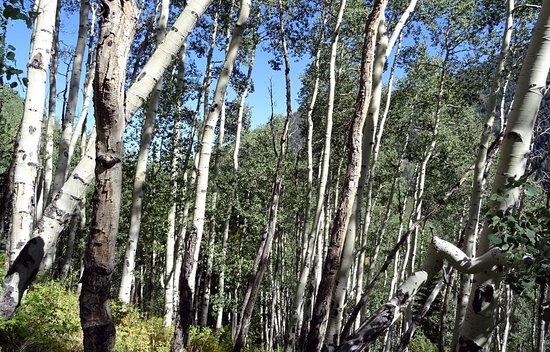 American Lake Trail - auf dem Weg hinauf