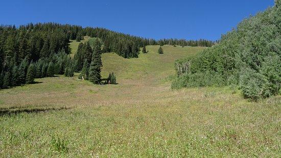American Lake Trail - Weg hinauf - vorbei an schöner Wieser