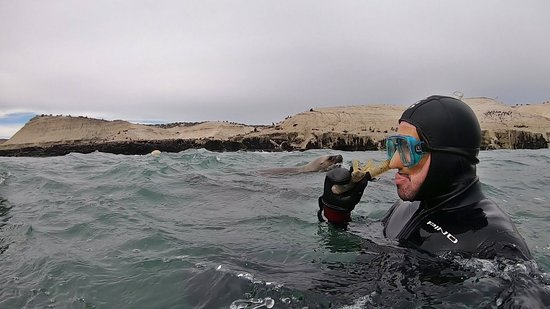 3 friends playing with sea lions