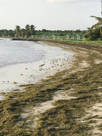 De paseo x playa machos  ceiba